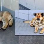В аэропорту Петропавловска-Камчатского пёс ожидает своего хозяина