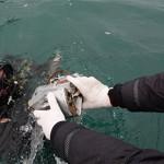 Спасатели подняли на поверхность все основные фрагменты разбившегося Ту-154