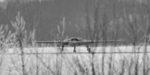 Ударный БПЛА «Охотник» выполнил первый полёт