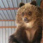 В Шереметьево из Петропавловска-Камчатского доставили медведицу Машу