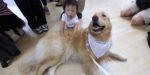 В Домодедово снять стресс перед полётом помогут собаки